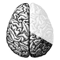 Brain Timer